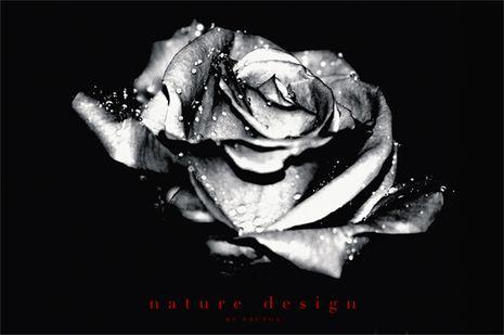 naturaleza_36